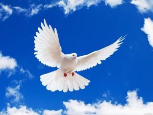 miru-mir-golub-na-sinem-nebe