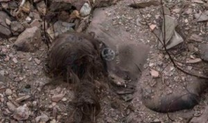 A female corpse found by OSCE mission near Kommunarskaya mine.
