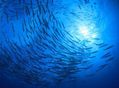 fish-in-ocean